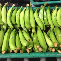 Introducing the Plantain